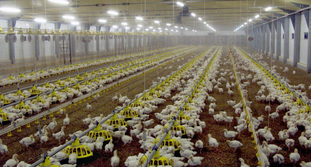 Правильное отопление птицефабрики
